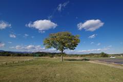 青空と木1