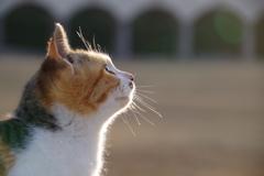 公園の猫3