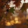 夕焼けと秋