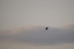 夕日と鳥1