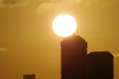 sunrise 1月4日大阪 2