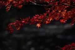 森林植物園の紅葉2