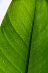 涼しげな緑 3