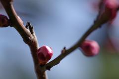 春はもうすぐ4