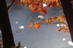 森林植物園の紅葉3