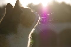公園の猫2