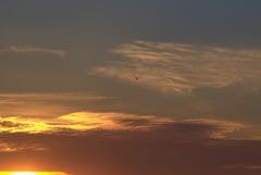 夕日と鳥 2