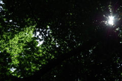新緑の光と影