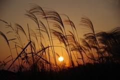 夕日とススキ1