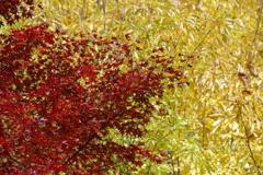 森林植物園の紅葉1