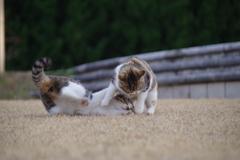 公園の猫1