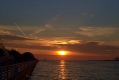 夕日と鳥 1