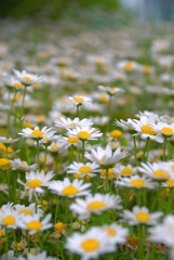 花いっぱい6