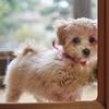 我が家の愛犬「チャミ」
