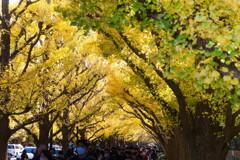 まぶしい季節が黄金色に街を染めて