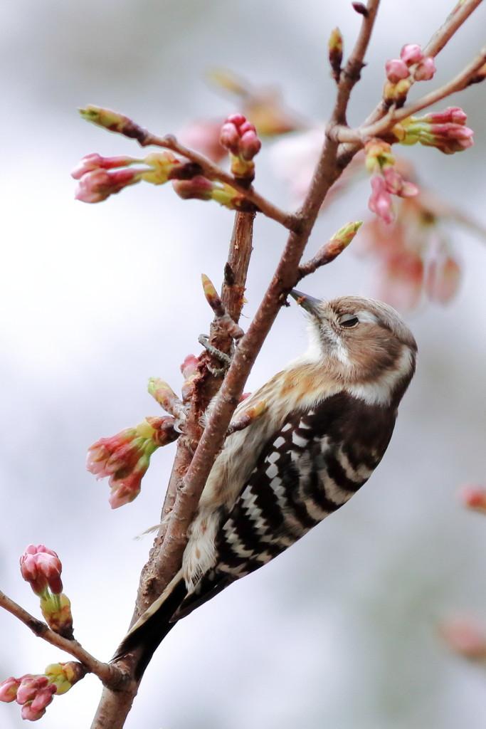春眠暁を覚えず