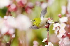 めぐる季節の中で、羽ばたけ強く