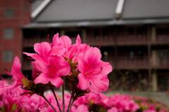 Flower road in Yokohama red brick