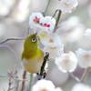 白春・梅の咲く頃