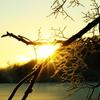 樹氷から差し込む朝日