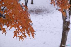 初冬の公園散歩...1