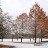初冬の公園散歩...2