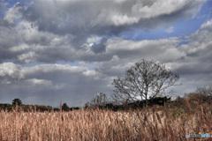 晩秋の湿原(2)
