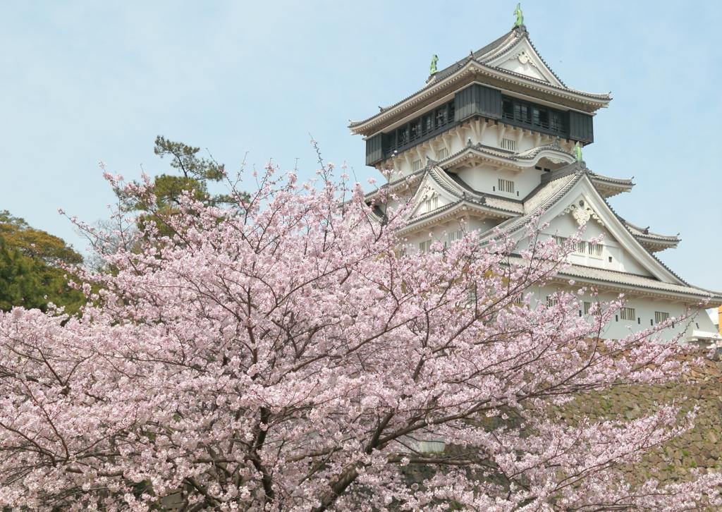 小倉城の桜 1