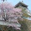 小倉城の桜 2