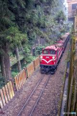 台湾 阿里山森林鉄道