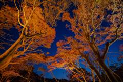 八瀬の紅葉の小径