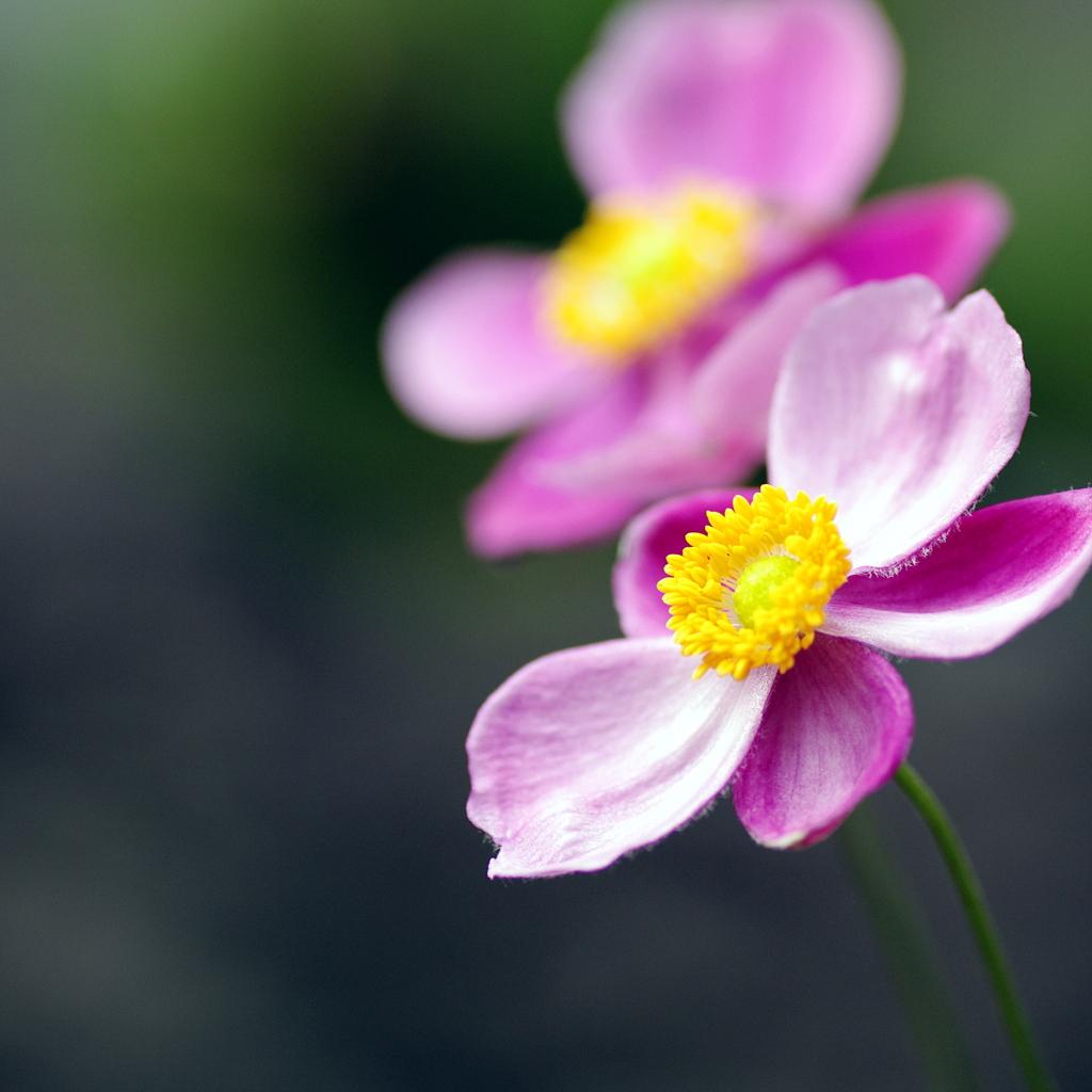 花びらのない花