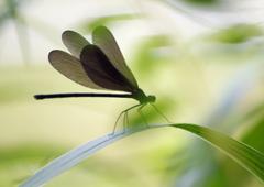 黒褐色の翅