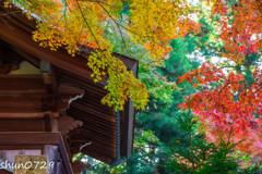 常隆寺の紅葉-1