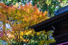 常隆寺の紅葉-3