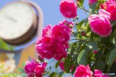 薔薇園-3