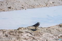 水辺の野鳥-9