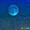 池の水の中の月夜