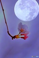 お月見花見