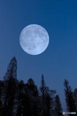 月夜の井の頭公園