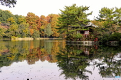 三宝寺池の秋化粧
