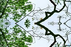 マジックピクチャー(葉と枝の攻防)