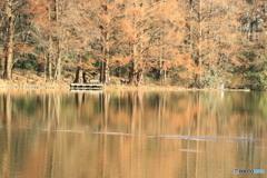 三宝寺池の日差し