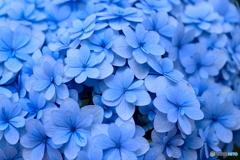 青の美しさ