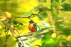絵画的鳥風景