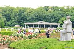 神代植物公園のバラ園(完成された春)