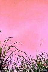 池の中の夕焼け小焼け(縦)