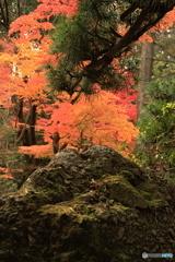 さざれ石と松と紅葉