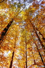 秋色に抱かれて