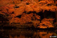 思い出の秋色